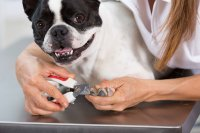 Cute dog getting nails trimmed