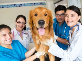 CCTP-Veterinary Assistant Professional Program | Ed4Career